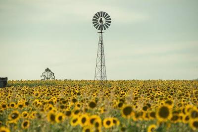 Field in Australia