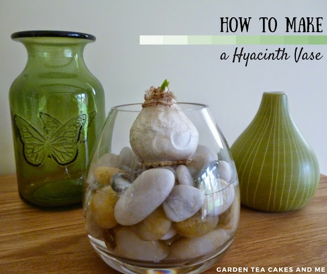 How to grow Hyacinth bulb vase for Christmas