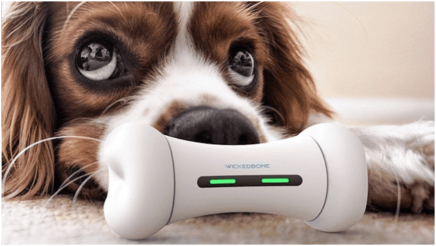 6 Interesting Tech Gadgets for Your Pets in 2020