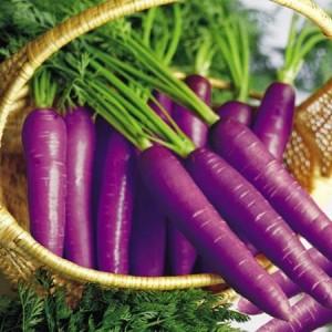 Lobak ungu Vivix