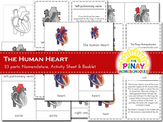 Human Heart Learning Pack