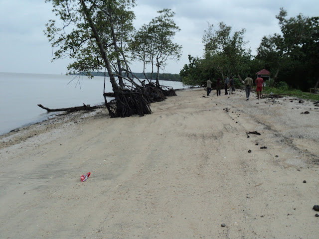 Mangrove Pantai Solop