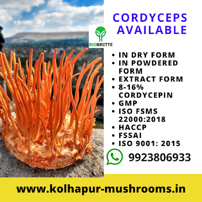 Cordyceps Mushrooms Available for Sale