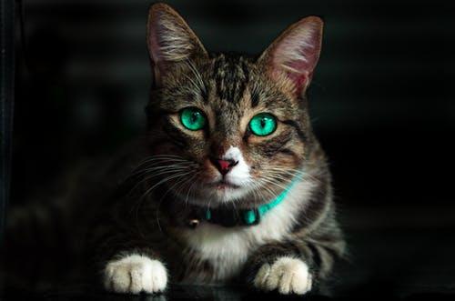 حب القطط للانسان- معلومة