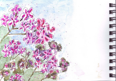 Watercolour pen and wash sketch of pink geraniums, showing the edge of the sketchbook