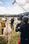 Un tal Alonso Quijano: El Quijote colombiano llevado al cine se estrena gratis y en línea