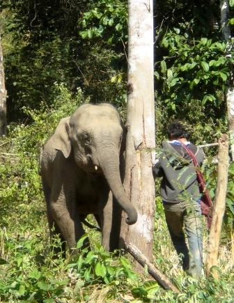 elephant and mahout relationship