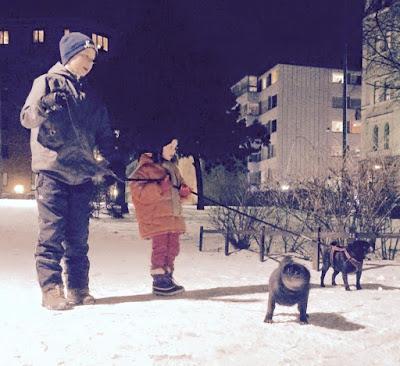 Apua koiran ulkoilutukseen