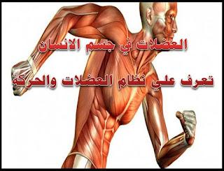 العضلات في جسم الانسان تعرف علي نظام العضلات والحركة