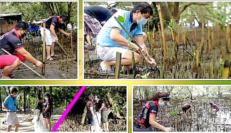 Mangrove Planting Now Mandatory For Every Philippine Ports Authority (PPA) Contract & Permit Issued