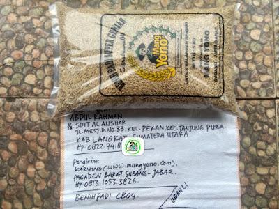 Benih Padi Pesanan    ABDUL RAHMAN Langkat, Sumut.     (Sebelum di Packing).