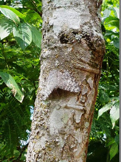 Camouflaged moth on tree trunk