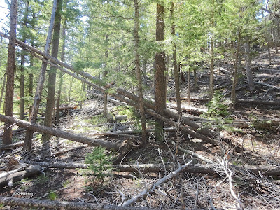 Fallen trees, Rocky Mountain National Park