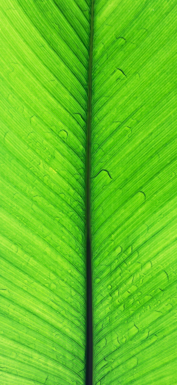 خلفية ورقة شجر موز خضراء عملاقة مبللة بقطرات المطر