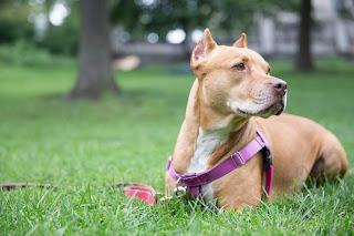 Dog Walkers Manhattan Important Options For You To Consider