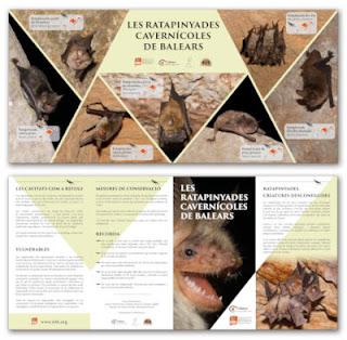 Les ratapinyades cavernícoles de Balears