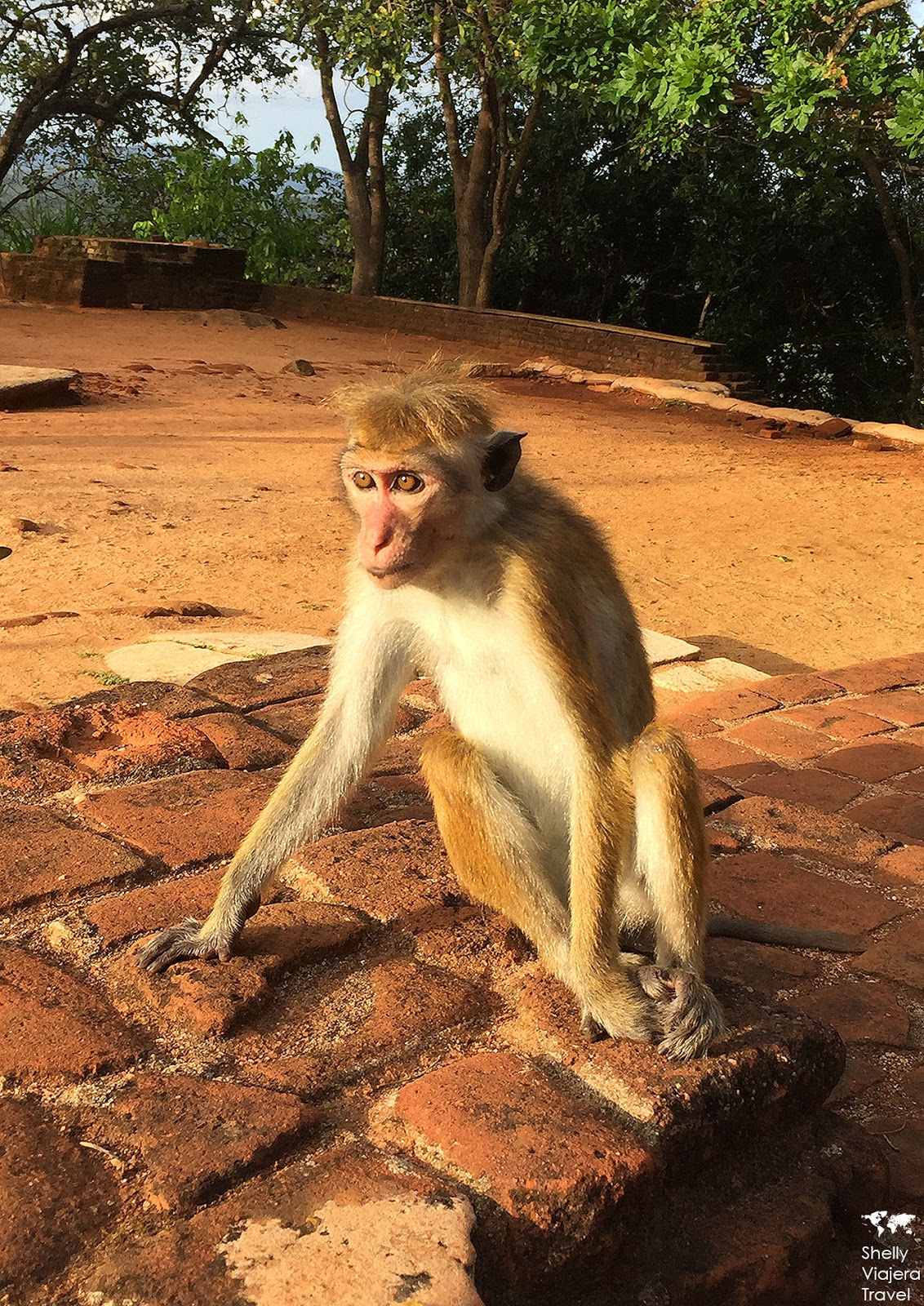 Travelling Monkey With Symbols Imagenesmy