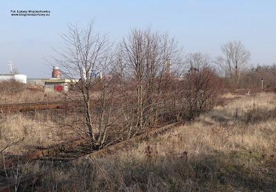 Kędzierzyn-Koźle Zachodnie, zadrzewione torowisko