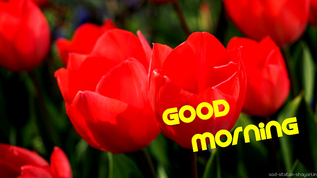 good morning red images flower