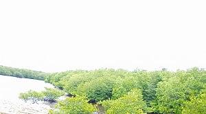 Jenis ekowisata berdasarkan peraturan menteri dalam negeri No. 33 tahun 2009 terbagi menjadi beberapa jenis yakni ekowisata bahari, ekowisata hutan, ekowisata karst, dan ekowisata pegunungan. Ekowisata bahari adalah kegiatan wisata yang lebih condong terhadap penggunaan pesisir pantai dan laut. Ekowisata hutan adalah wisata berbasis kawasan hutan dimana objek di dalamnya terdiri dari berbagai macam ekosistem, flora, dan fauna yang dapat menarik perhatian wisatawan. Karst adalah bentang alam pembentukan-nya terjadi sebagai akibat dari pelarutan air pada batu gamping dan/atau dolomit. Ekowisata pegunungan merupakan wisata berbasis dataran tinggi (pegunungan) dimana objek utamanya adalah pemandangan alam yang dapat dinikmati oleh pengunjung.