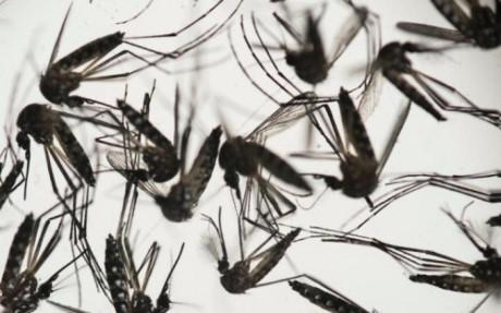 Người lớn đang khỏe mạnh có thể rối loạn thần kinh nếu nhiễm virut Zika