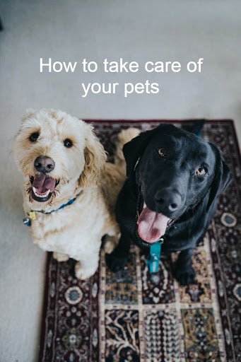 pet caring tips