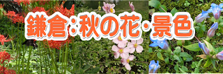 鎌倉:秋の花