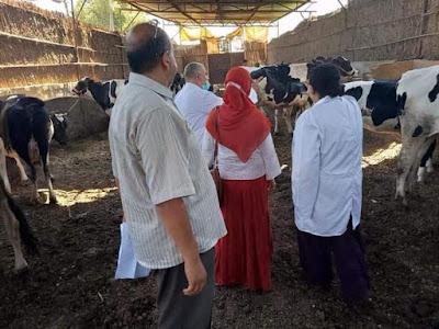 بيطري المنوفية  : تحصين  ما يقرب من  (203) ألف رأس ماشية ضد مرض الحمى القلاعية بنسبة 54.2 %  حتى الآن