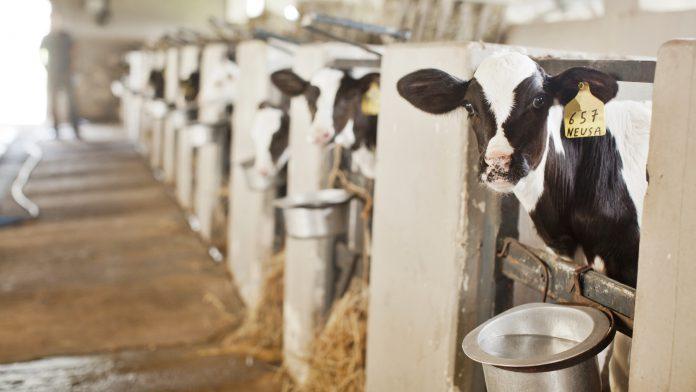 FAESP pleiteia isenção de ICMS para leite