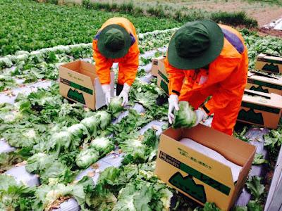 Tuyển 14 nam canh tác nông nghiệp tại Iwate - Nhật Bản tháng 8/2016