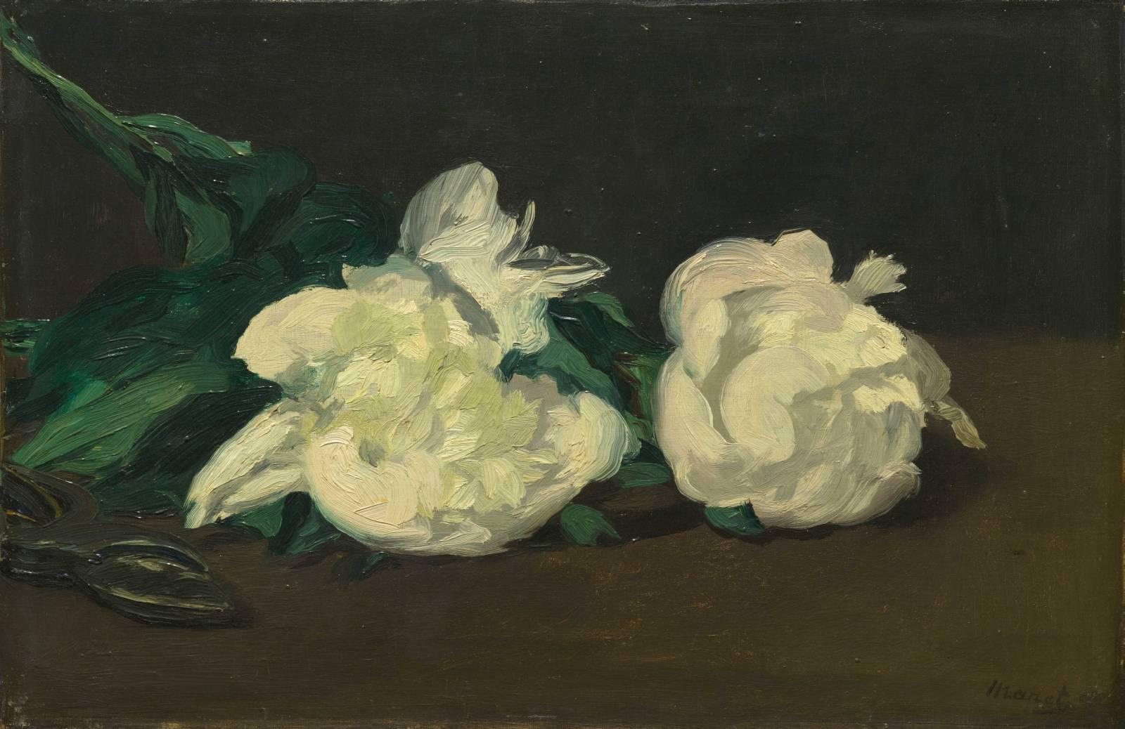 Картинки по запросу branche de pivoines blanches et sécateur