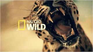 خلفيات, NatGeo, الافتراضية, لدردشة, ومحادثات, الفيديو, بجودة, عالية, من, موقعها, الرسمي