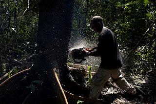 jungle-cutting-in-brazil