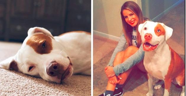 Mulher alerta Donos de Cachorros após seu Cachorro perder a Vida ao comer Pacote de Salgadinhos