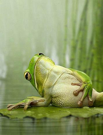 井の中の蛙大海を知らず。されど...