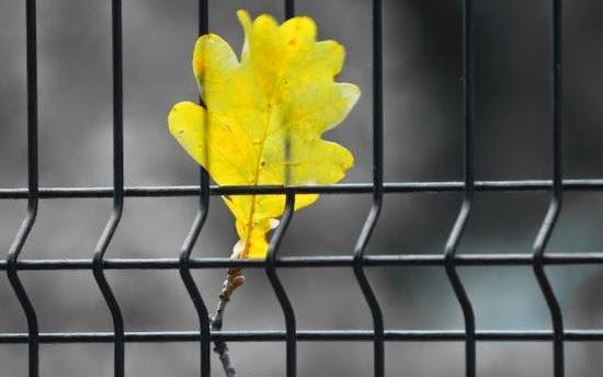 O zmienianiu życia na lepsze, czyli jak mogą żyć byli więźniowie - Czytaj więcej »