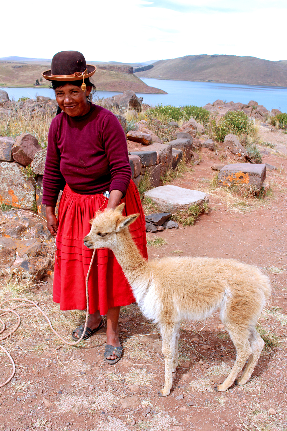 Vicuna in Puno, Peru - travel blog