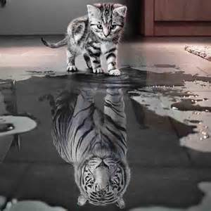 Autoconocimiento: Porque es importante conocerse a si mismo para crecer y mejorar