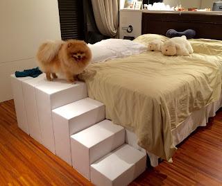 escadas para cães spitz