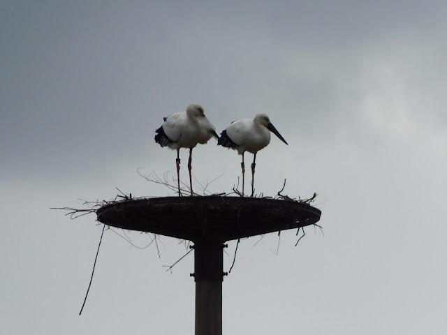 幸せを運ぶ鳥