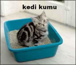 kedi kumu ve toksoplazma