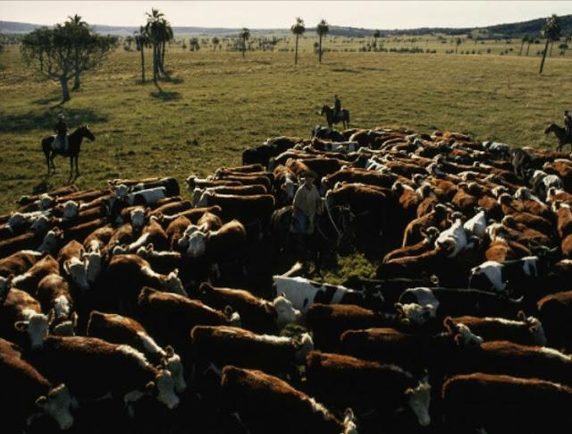 "Alt: = ""photo of livestock ranch"""