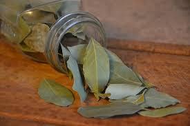 Tanaman Herbal: daun salam