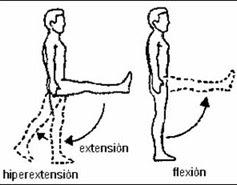 flexion de articulaciones