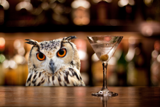cute owl bar