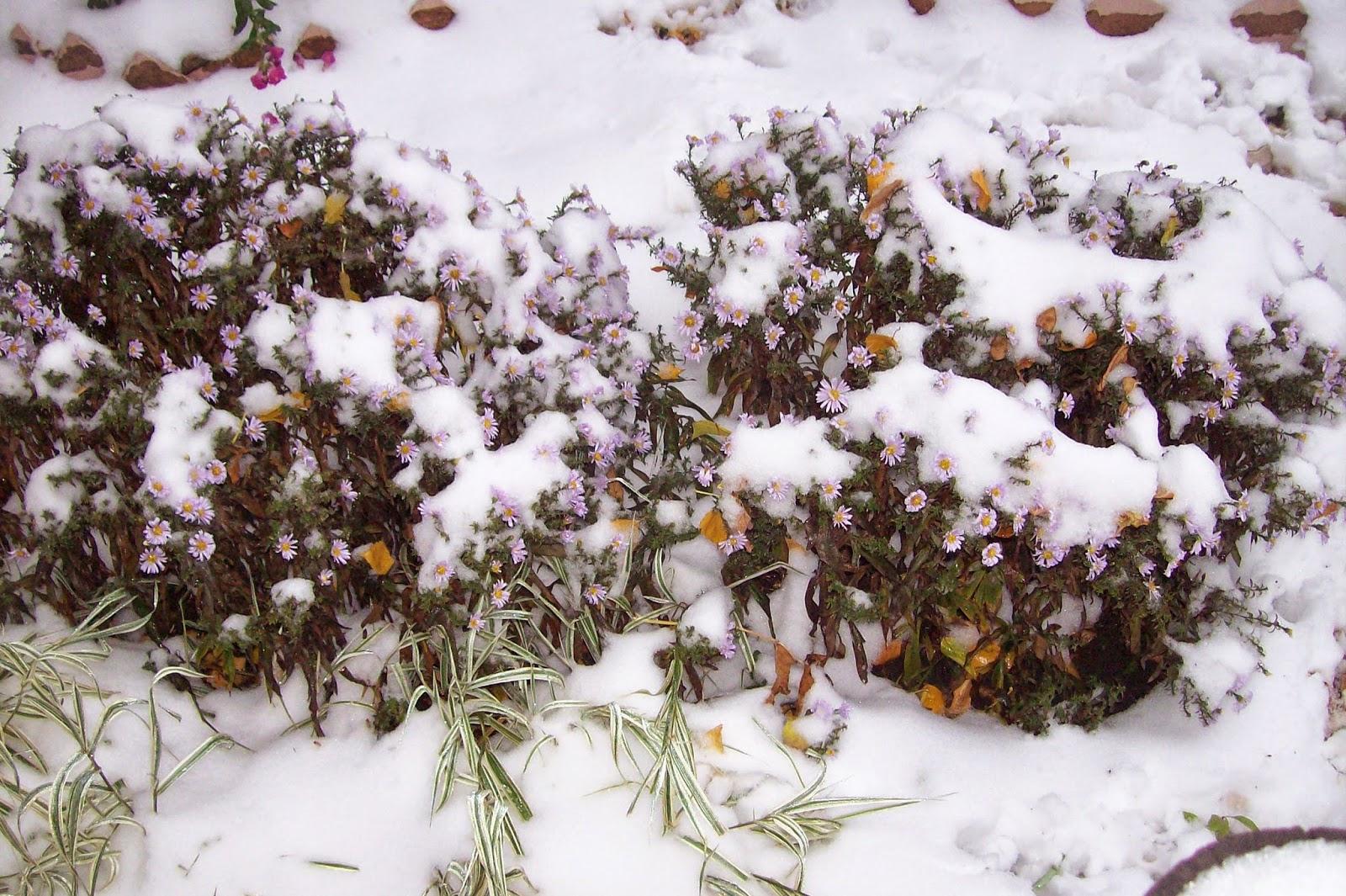 первый снег осени 2014 в Самаре