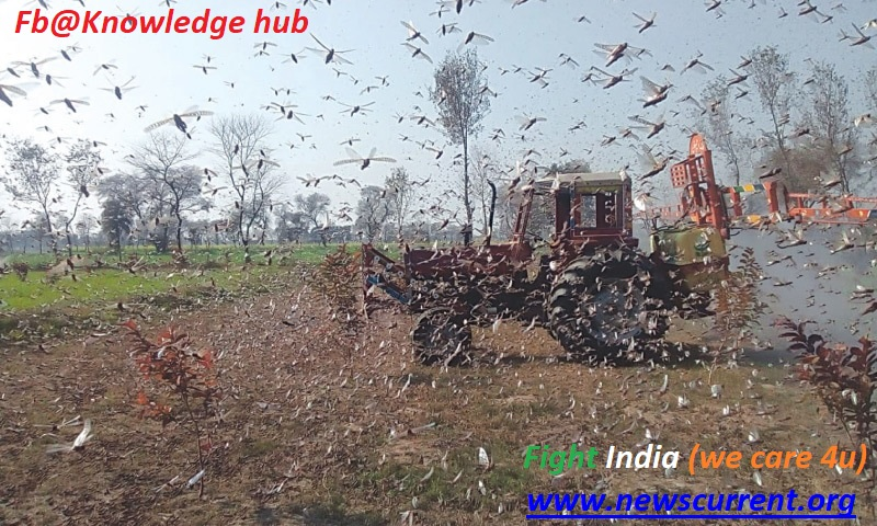 LOCUST_ATTACK_IN_INDIA