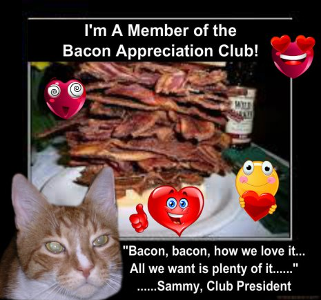 Yeah Cat, BACON!