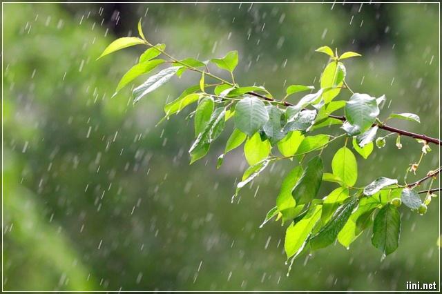 mưa rơi trên lá