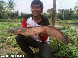 Umpan Dasar Serbuk Untuk Ikan Lele